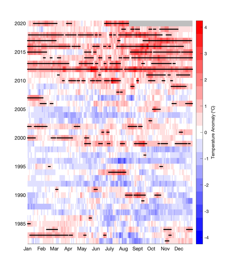 Daily sea surface temperature anomalies in the Gulf of Maine. Each row is a year, each column is the day of the year. Black dots indicate marine heatwaves. Recent years reflect more red and more black dots.