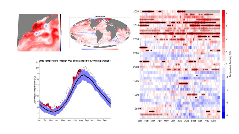 Several sea surface temperature graphics that are represented/explained in the piece are shown here as a preview. These are impressionistic in use and not meant to be read/understood yet. Each graphic is individually explained in the piece.