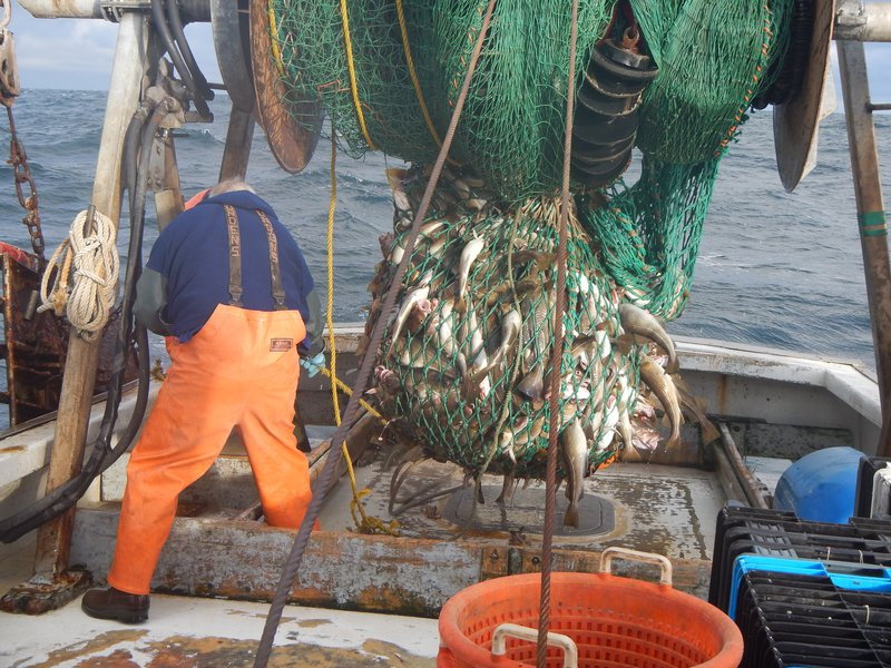 A groundfish vessel finishes a trawl, emptying fish from the net onto the deck of the boat